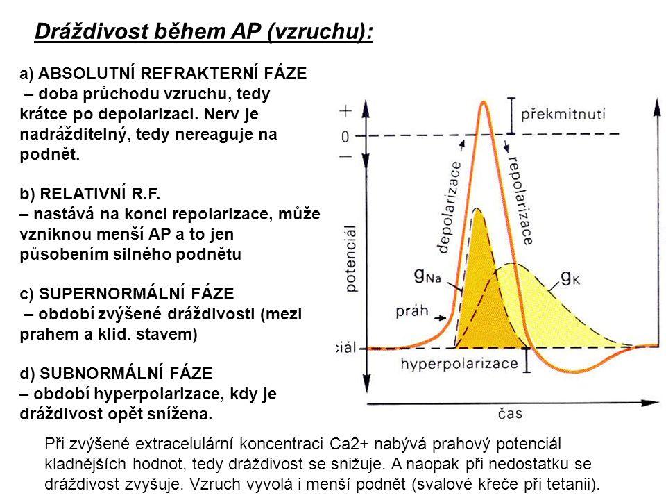 Dráždivost během AP (vzruchu): a) ABSOLUTNÍ REFRAKTERNÍ FÁZE – doba průchodu vzruchu, tedy krátce po depolarizaci. Nerv je nadrážditelný, tedy nereagu