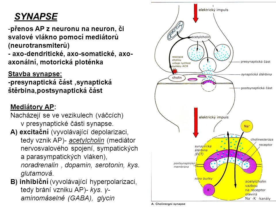 SYNAPSE -přenos AP z neuronu na neuron, či svalové vlákno pomocí mediátorů (neurotransmiterů) - axo-dendritické, axo-somatické, axo- axonální, motoric