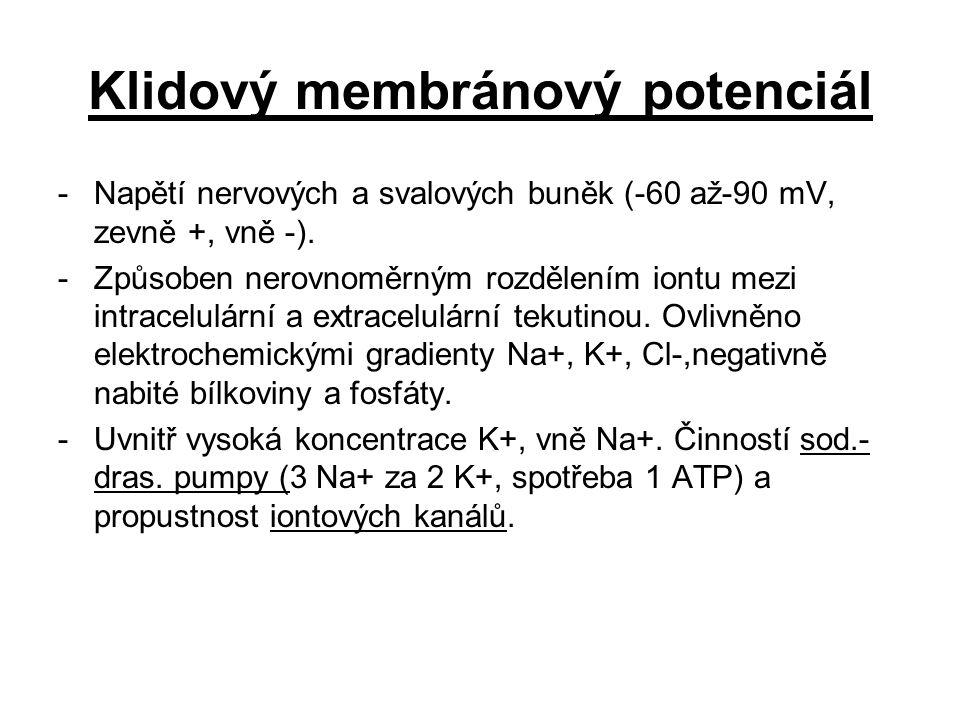 Klidový membránový potenciál -Napětí nervových a svalových buněk (-60 až-90 mV, zevně +, vně -). -Způsoben nerovnoměrným rozdělením iontu mezi intrace