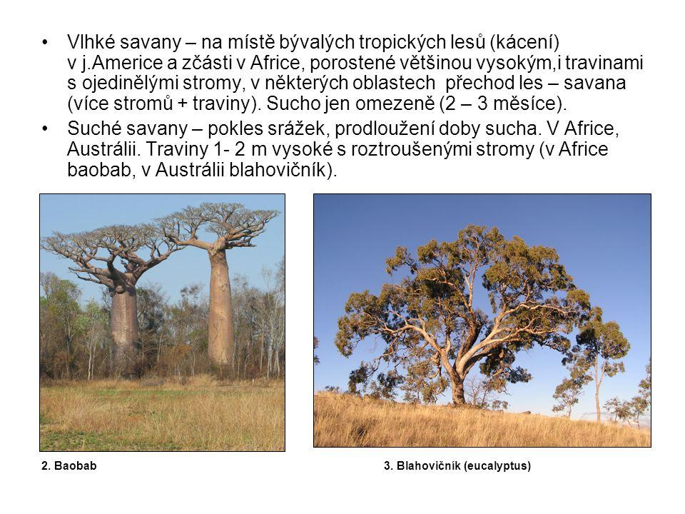 Vlhké savany – na místě bývalých tropických lesů (kácení) v j.Americe a zčásti v Africe, porostené většinou vysokým,i travinami s ojedinělými stromy, v některých oblastech přechod les – savana (více stromů + traviny).