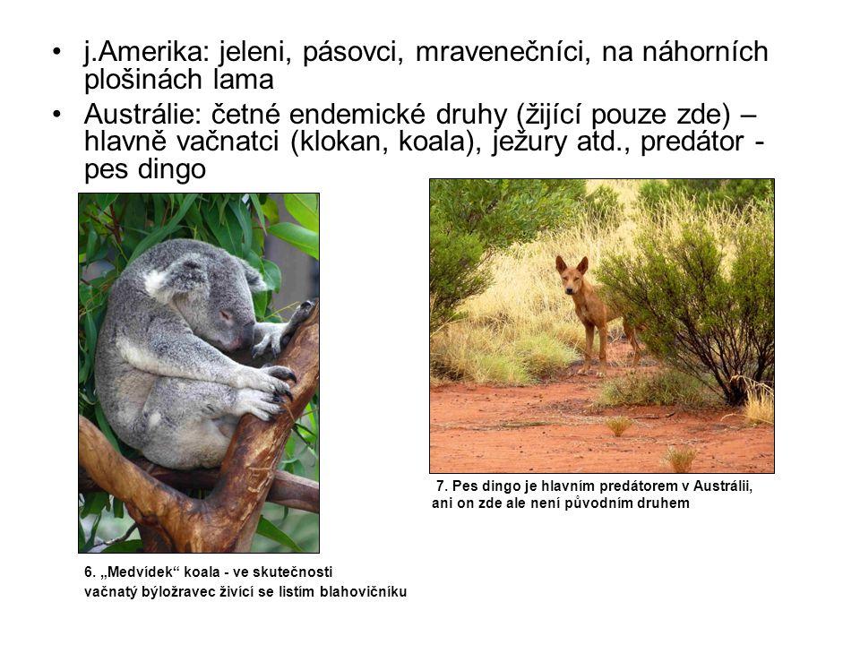 j.Amerika: jeleni, pásovci, mravenečníci, na náhorních plošinách lama Austrálie: četné endemické druhy (žijící pouze zde) – hlavně vačnatci (klokan, koala), ježury atd., predátor - pes dingo 7.