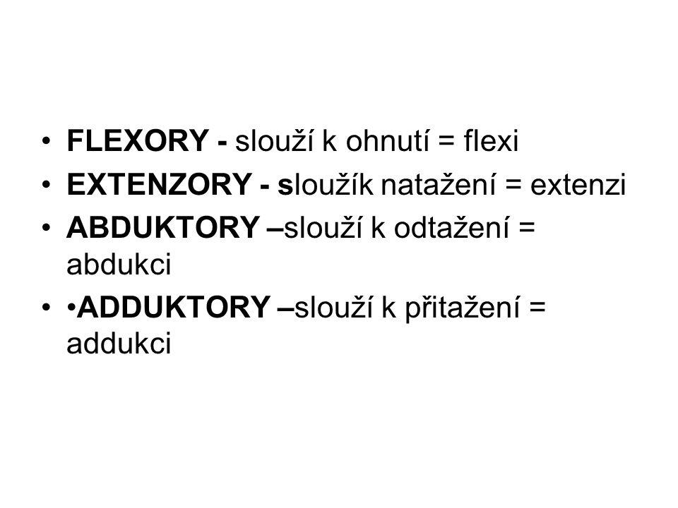 FLEXORY - slouží k ohnutí = flexi EXTENZORY - sloužík natažení = extenzi ABDUKTORY –slouží k odtažení = abdukci ADDUKTORY –slouží k přitažení = addukc