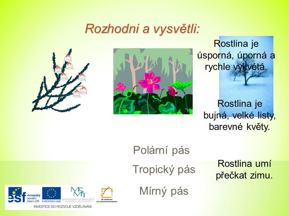 Rozhodni a vysvětli: Rostlina je úsporná, úporná a rychle vykvétá. Rostlina je bujná, velké listy, barevné květy. Rostlina umí přečkat zimu. Polární p
