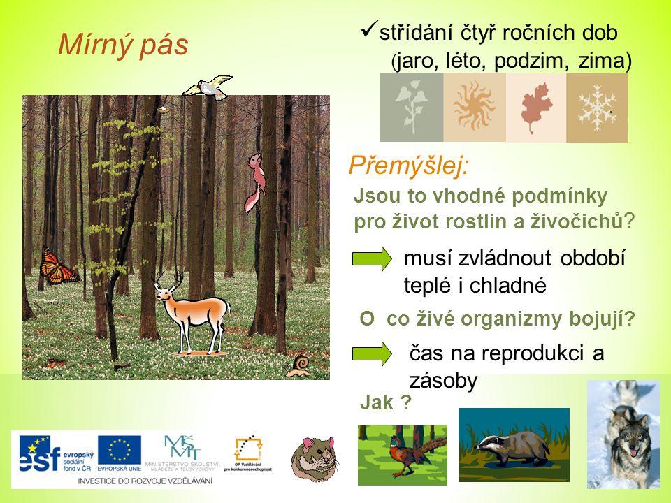 Mírný pás střídání čtyř ročních dob ( jaro, léto, podzim, zima) Přemýšlej: Jsou to vhodné podmínky pro život rostlin a živočichů ? musí zvládnout obdo
