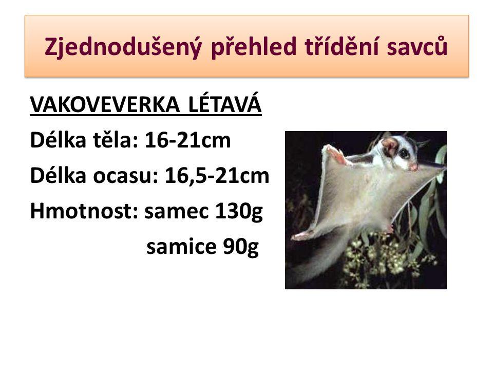 VAKOVEVERKA LÉTAVÁ Délka těla: 16-21cm Délka ocasu: 16,5-21cm Hmotnost: samec 130g samice 90g