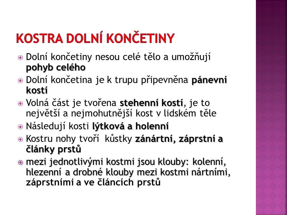 zdroj obrázku: http://vyuka.zsjarose.cz/index.php?action=lesson_detail&id=376