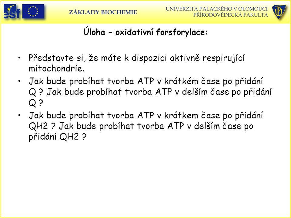 Úloha – oxidativní forsforylace: Představte si, že máte k dispozici aktivně respirující mitochondrie. Jak bude probíhat tvorba ATP v krátkém čase po p