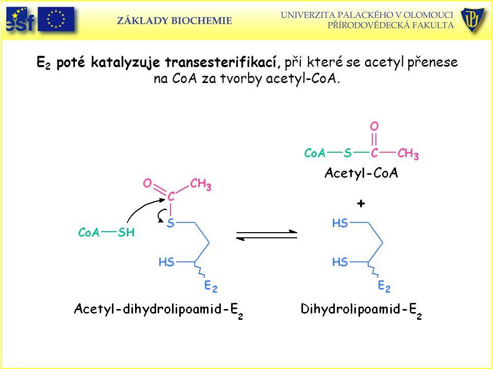 E 2 poté katalyzuje transesterifikací, při které se acetyl přenese na CoA za tvorby acetyl-CoA.