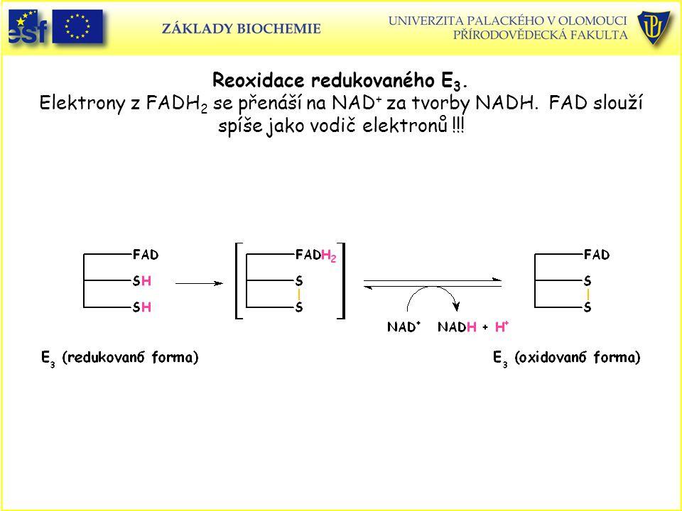 Reoxidace redukovaného E 3. Elektrony z FADH 2 se přenáší na NAD + za tvorby NADH. FAD slouží spíše jako vodič elektronů !!!
