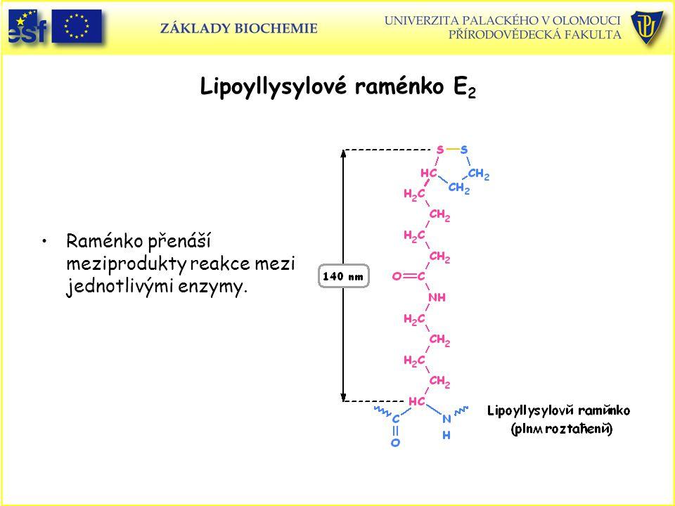 Lipoyllysylové raménko E 2 Raménko přenáší meziprodukty reakce mezi jednotlivými enzymy.