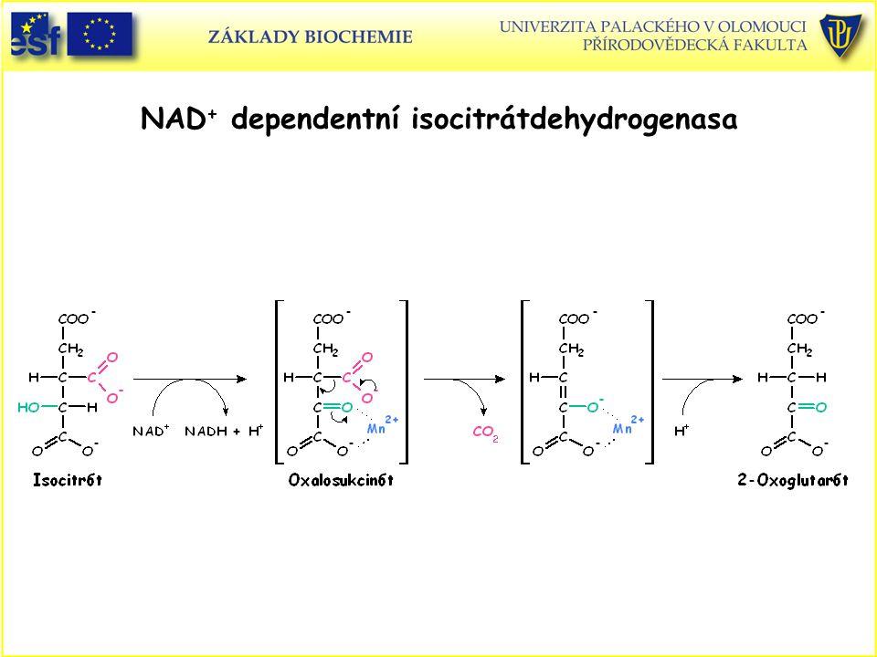 NAD + dependentní isocitrátdehydrogenasa
