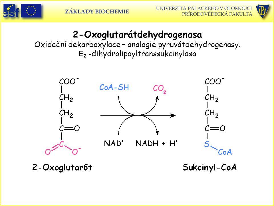 2-Oxoglutarátdehydrogenasa Oxidační dekarboxylace – analogie pyruvátdehydrogenasy. E 2 -dihydrolipoyltranssukcinylasa