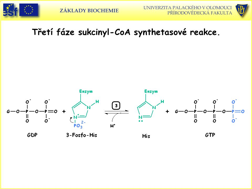 Třetí fáze sukcinyl-CoA synthetasové reakce.