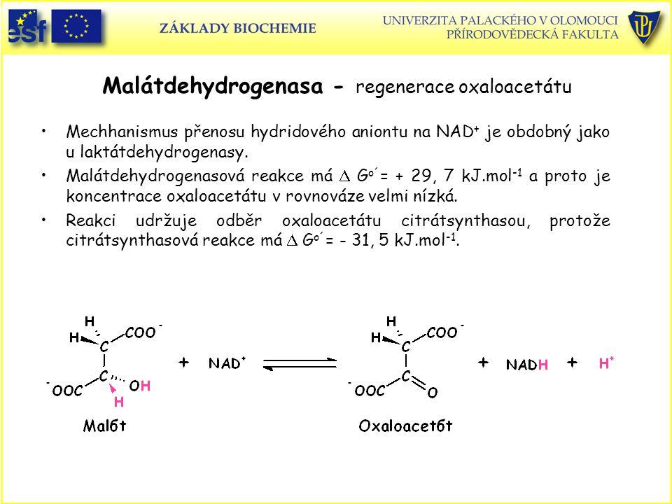 Malátdehydrogenasa - regenerace oxaloacetátu Mechhanismus přenosu hydridového aniontu na NAD + je obdobný jako u laktátdehydrogenasy. Malátdehydrogena