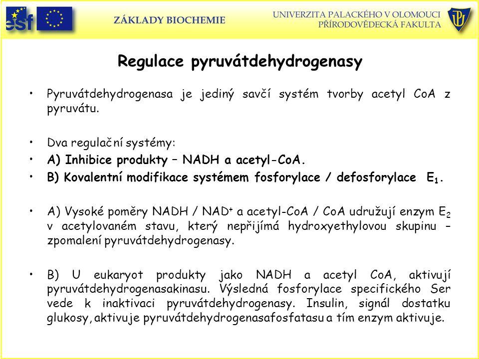 Regulace pyruvátdehydrogenasy Pyruvátdehydrogenasa je jediný savčí systém tvorby acetyl CoA z pyruvátu. Dva regulační systémy: A) Inhibice produkty –