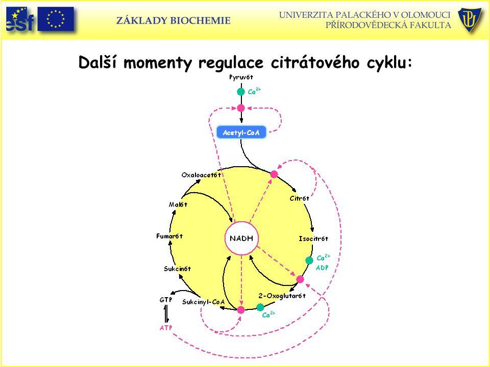 Další momenty regulace citrátového cyklu: