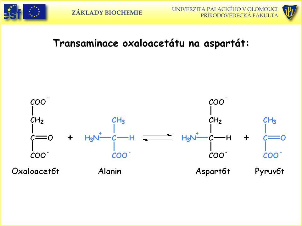 Transaminace oxaloacetátu na aspartát: