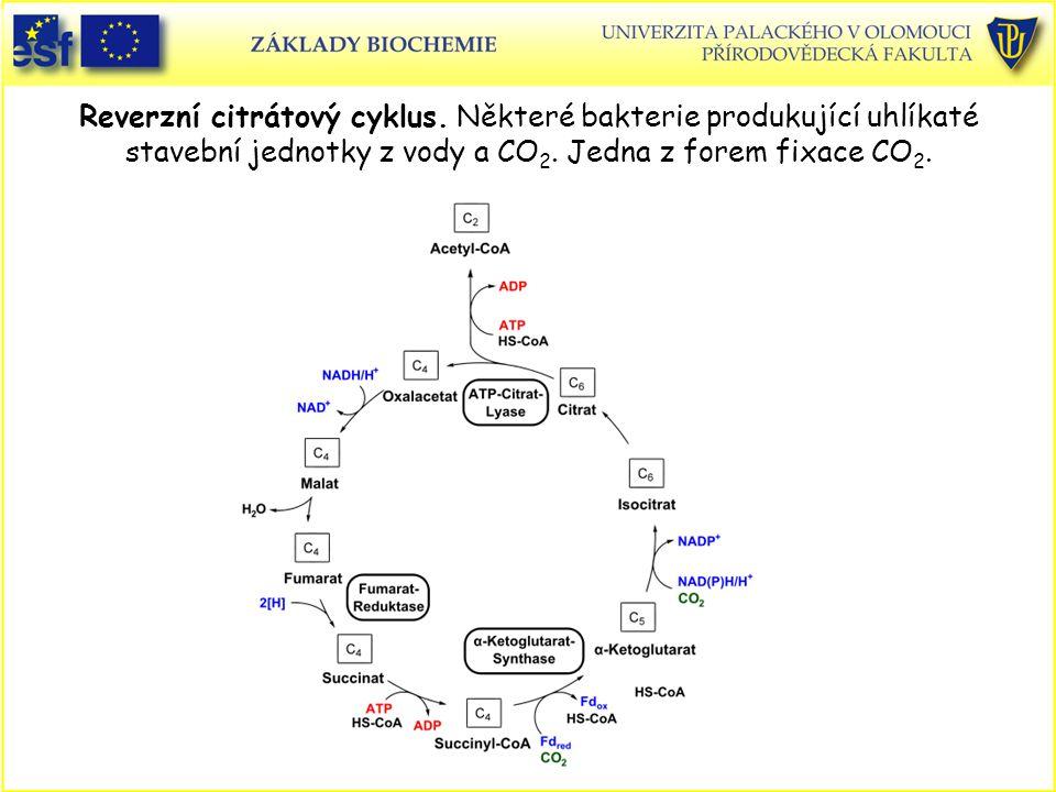 Reverzní citrátový cyklus. Některé bakterie produkující uhlíkaté stavební jednotky z vody a CO 2. Jedna z forem fixace CO 2.