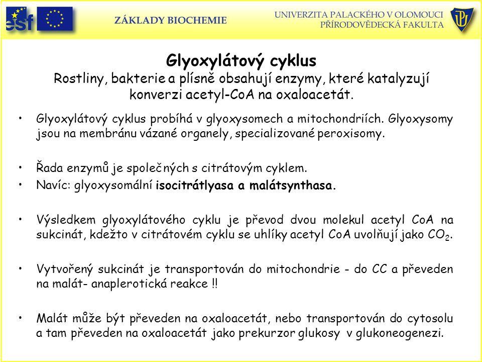 Glyoxylátový cyklus Rostliny, bakterie a plísně obsahují enzymy, které katalyzují konverzi acetyl-CoA na oxaloacetát. Glyoxylátový cyklus probíhá v gl