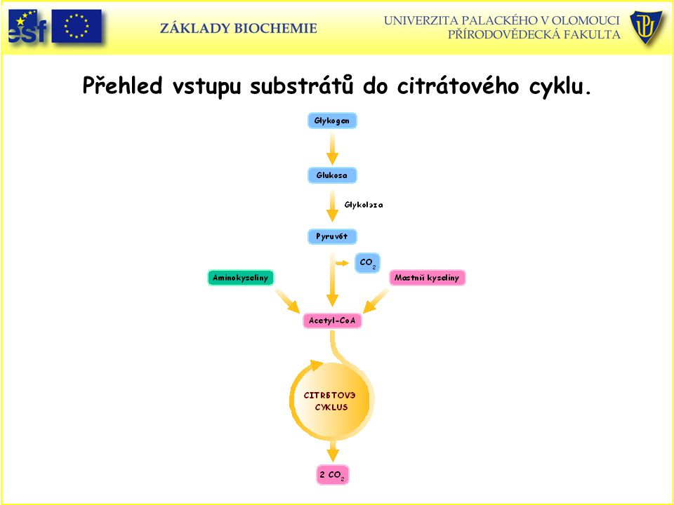 Přehled vstupu substrátů do citrátového cyklu.