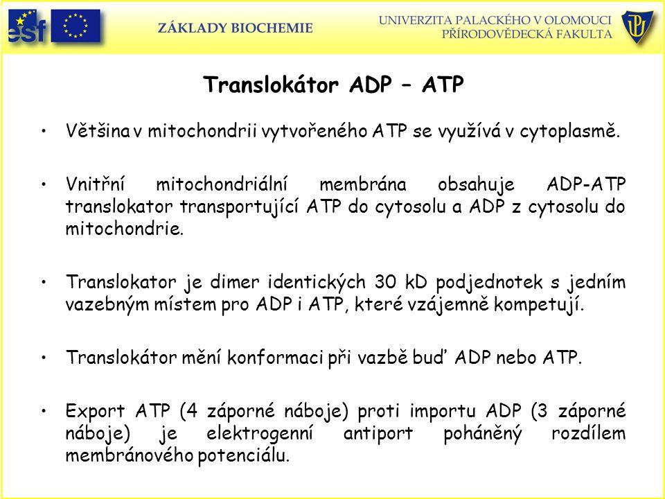 Translokátor ADP – ATP Většina v mitochondrii vytvořeného ATP se využívá v cytoplasmě. Vnitřní mitochondriální membrána obsahuje ADP-ATP translokator