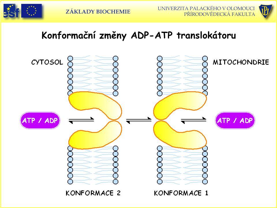 Konformační změny ADP-ATP translokátoru