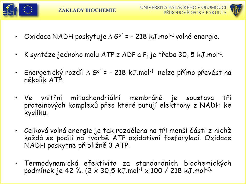 Oxidace NADH poskytuje  G o´ = - 218 kJ.mol -1 volné energie. K syntéze jednoho molu ATP z ADP a P i je třeba 30, 5 kJ.mol -1. Energetický rozdíl 