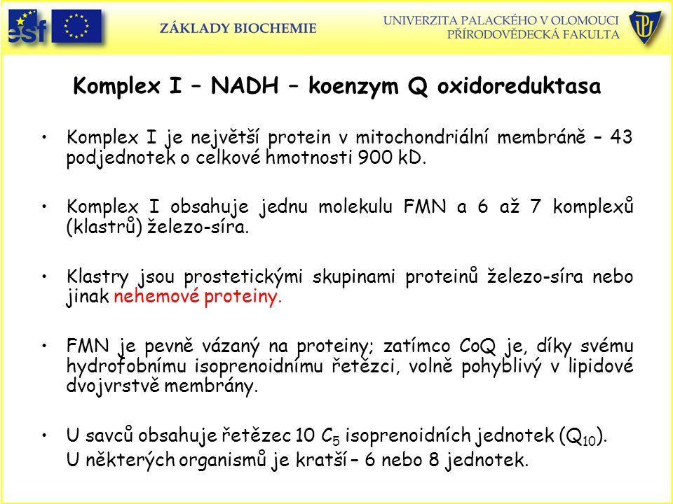 Komplex I – NADH – koenzym Q oxidoreduktasa Komplex I je největší protein v mitochondriální membráně – 43 podjednotek o celkové hmotnosti 900 kD. Komp