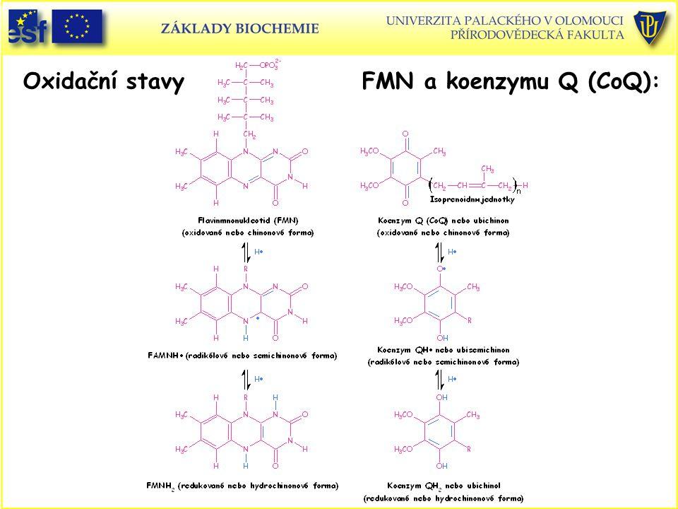 Oxidační stavyFMN a koenzymu Q (CoQ):