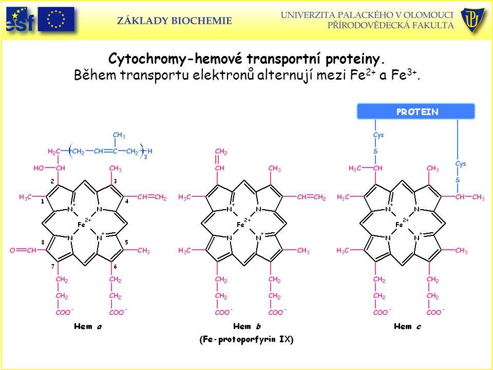 Cytochromy-hemové transportní proteiny. Během transportu elektronů alternují mezi Fe 2+ a Fe 3+.
