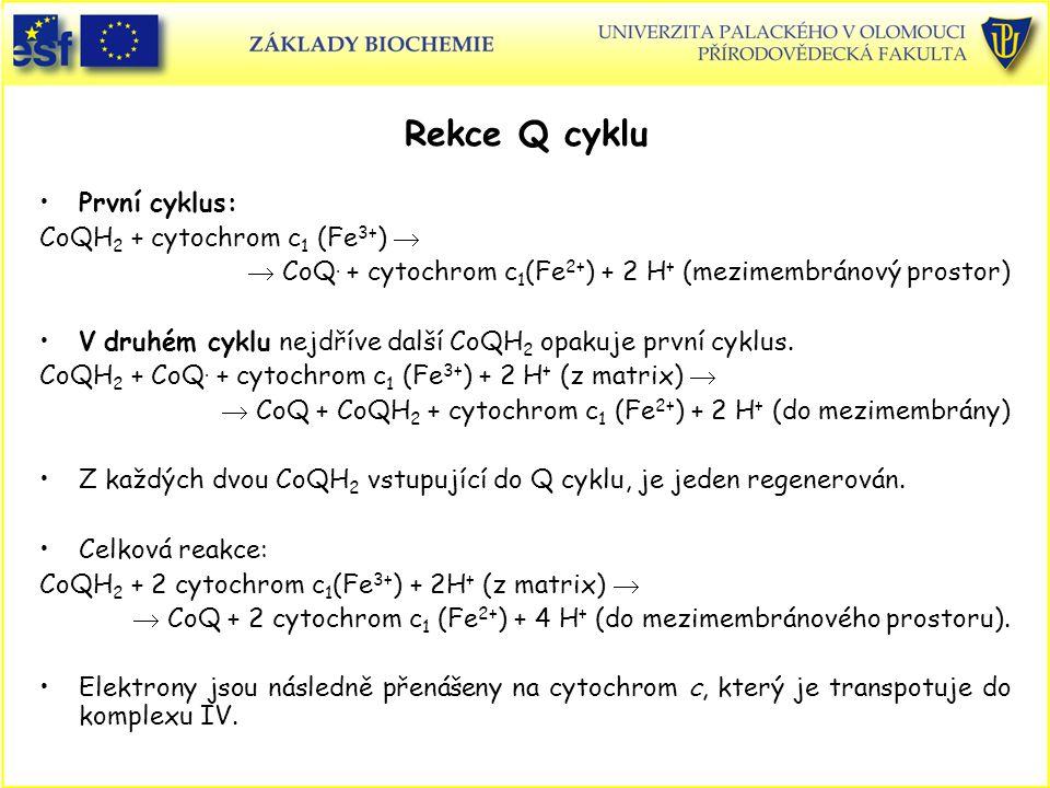 Rekce Q cyklu První cyklus: CoQH 2 + cytochrom c 1 (Fe 3+ )   CoQ. + cytochrom c 1 (Fe 2+ ) + 2 H + (mezimembránový prostor) V druhém cyklu nejdříve