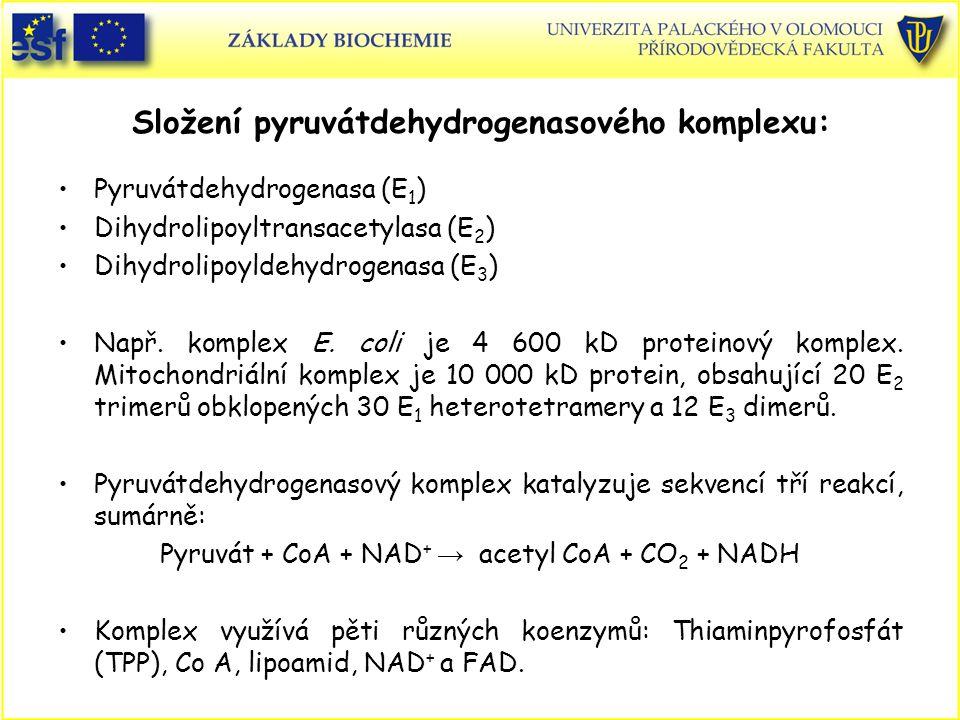 Složení pyruvátdehydrogenasového komplexu: Pyruvátdehydrogenasa (E 1 ) Dihydrolipoyltransacetylasa (E 2 ) Dihydrolipoyldehydrogenasa (E 3 ) Např. komp