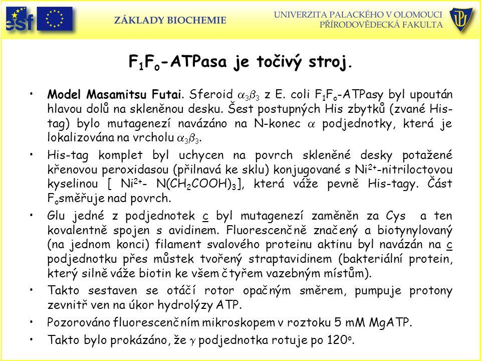 F 1 F o -ATPasa je točivý stroj. Model Masamitsu Futai. Sferoid     z E. coli F 1 F o -ATPasy byl upoután hlavou dolů na skleněnou desku. Šest pos