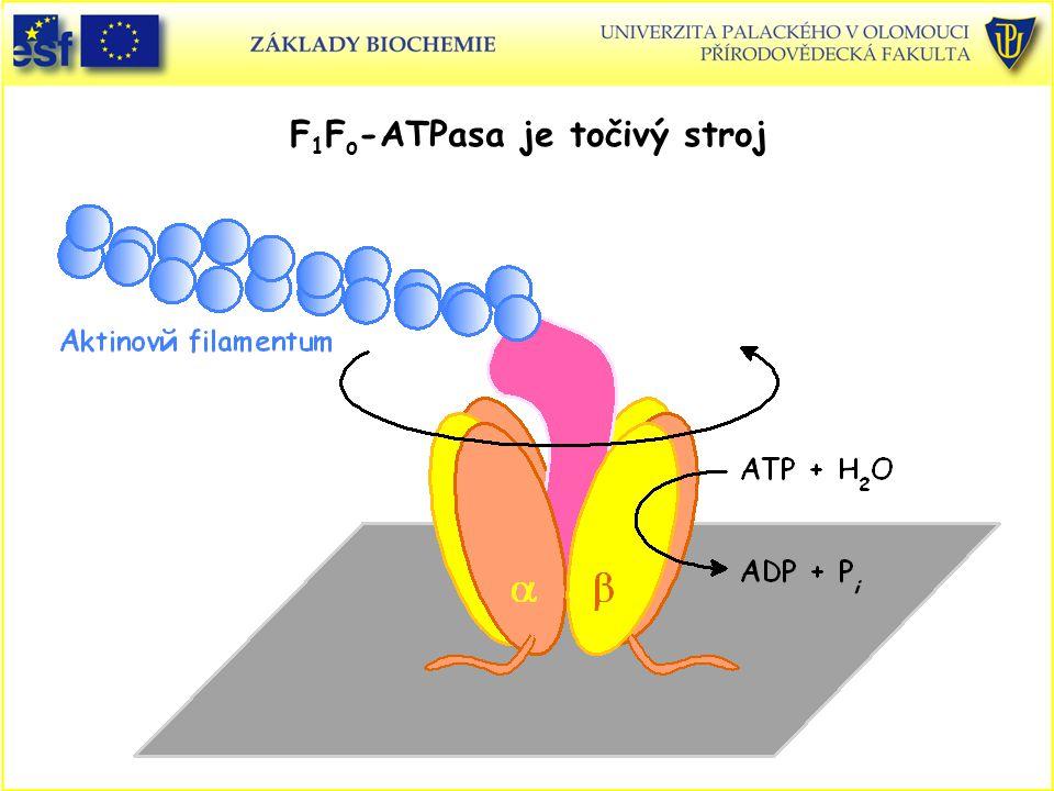 F 1 F o -ATPasa je točivý stroj