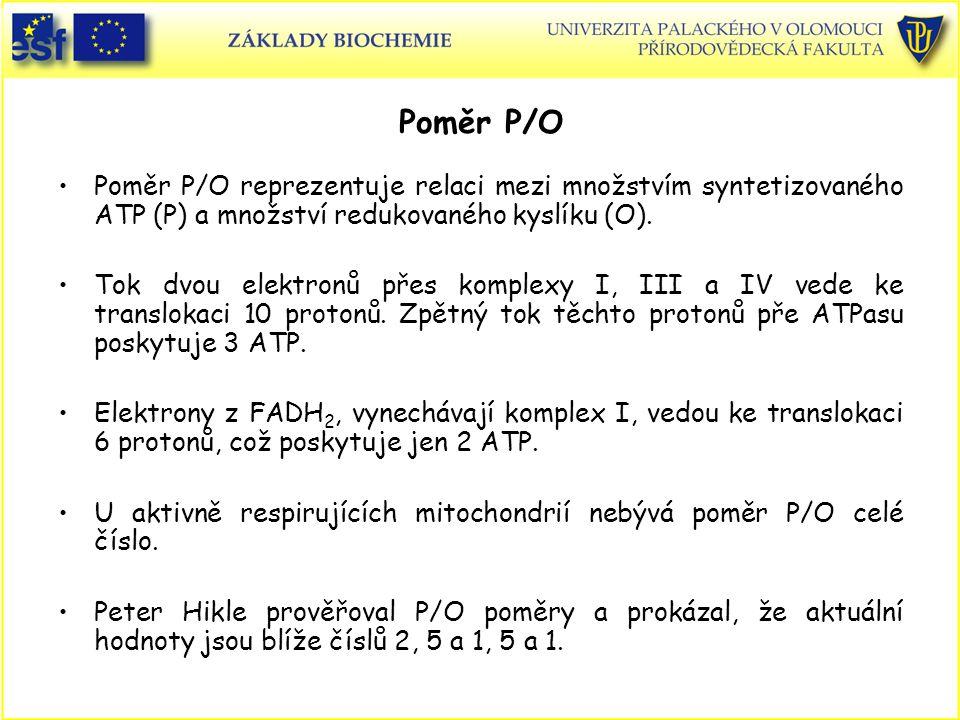 Poměr P/O Poměr P/O reprezentuje relaci mezi množstvím syntetizovaného ATP (P) a množství redukovaného kyslíku (O). Tok dvou elektronů přes komplexy I