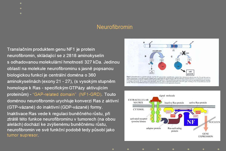 Neurofibromin Translačním produktem genu NF1 je protein neurofibromin, skládající se z 2818 aminokyselin s odhadovanou molekulární hmotností 327 kDa.
