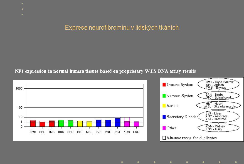 Mutace v genu NF1 - jedna z nejvyšších mutačních rychlostí u lidské choroby (1x10 -4 /gametu/generaci) - 50% případů de novo - široké spektrum mutací: od bodových mutací až po komplexní přestavby - žádné významnější hot spot oblasti (ex.