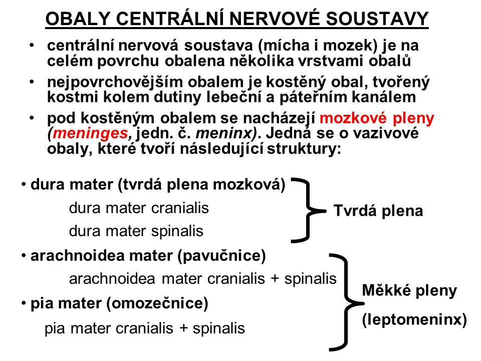 OBALY CENTRÁLNÍ NERVOVÉ SOUSTAVY centrální nervová soustava (mícha i mozek) je na celém povrchu obalena několika vrstvami obalů nejpovrchovějším obalem je kostěný obal, tvořený kostmi kolem dutiny lebeční a páteřním kanálem pod kostěným obalem se nacházejí mozkové pleny (meninges, jedn.