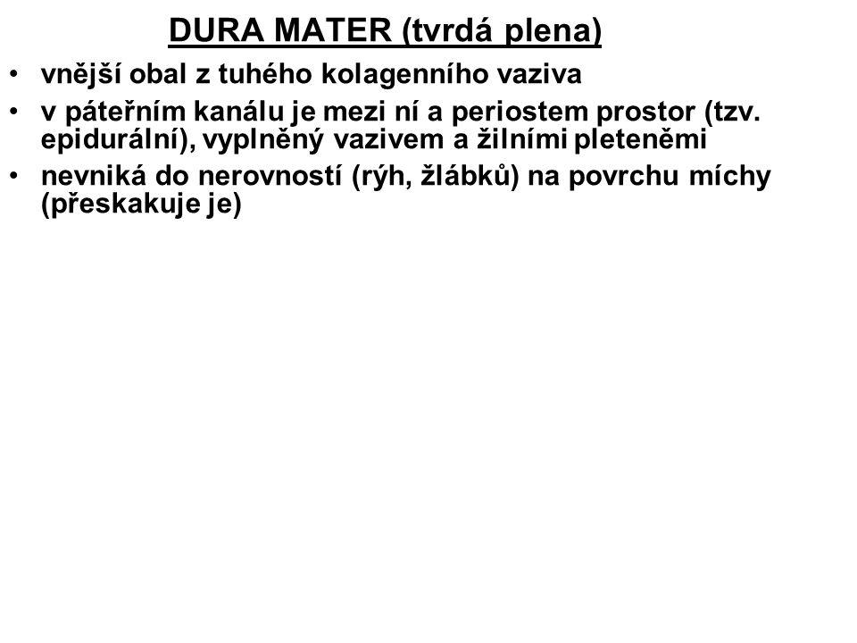 DURA MATER (tvrdá plena) vnější obal z tuhého kolagenního vaziva v páteřním kanálu je mezi ní a periostem prostor (tzv.