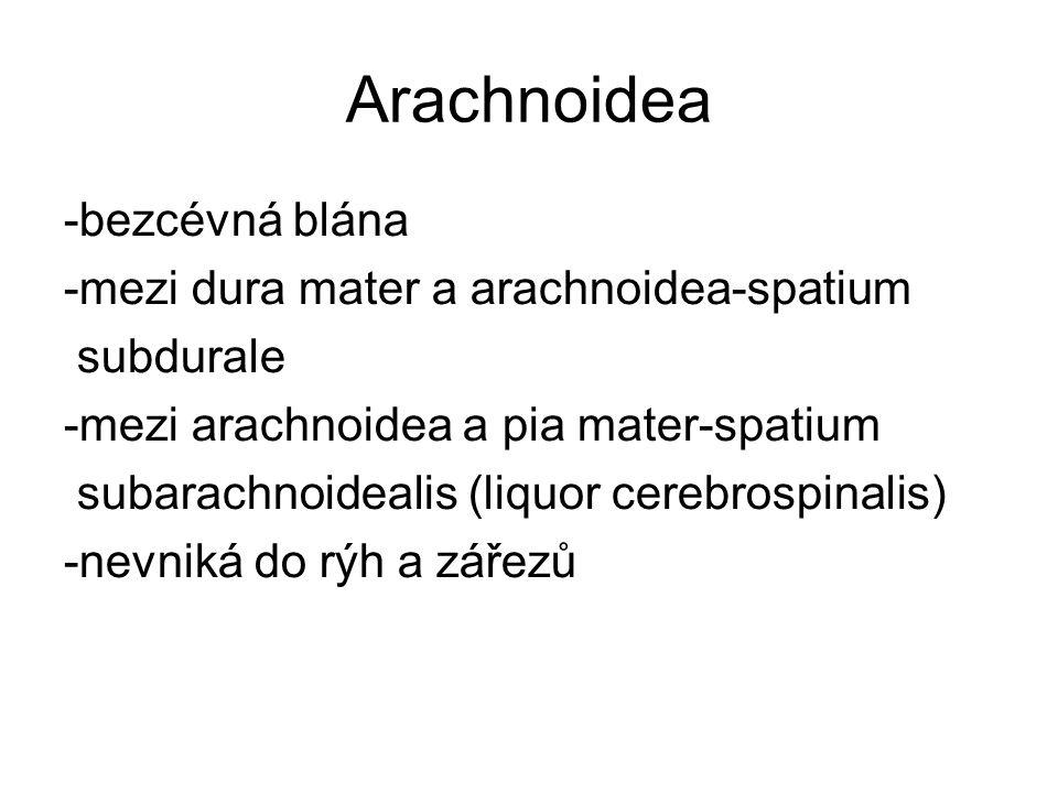Arachnoidea -bezcévná blána -mezi dura mater a arachnoidea-spatium subdurale -mezi arachnoidea a pia mater-spatium subarachnoidealis (liquor cerebrospinalis) -nevniká do rýh a zářezů