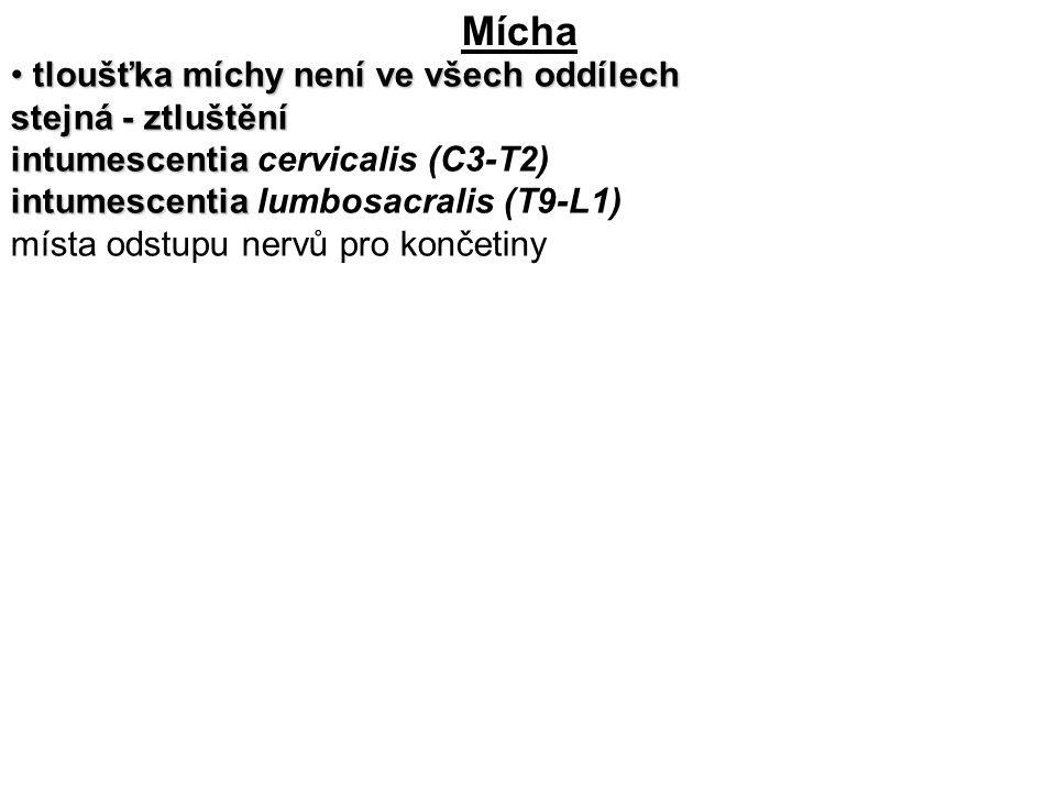 Mícha tloušťka míchy není ve všech oddílech stejná - ztluštění tloušťka míchy není ve všech oddílech stejná - ztluštění intumescentia intumescentia cervicalis (C3-T2) intumescentia intumescentia lumbosacralis (T9-L1) místa odstupu nervů pro končetiny