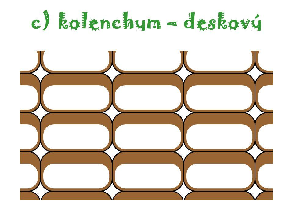 c)kolenchym – deskový