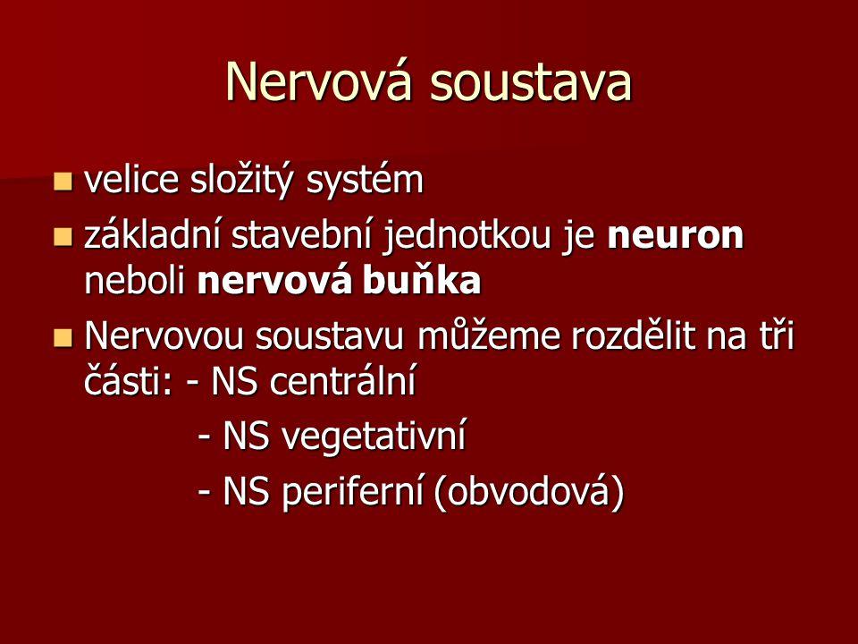 Nervová soustava velice složitý systém velice složitý systém základní stavební jednotkou je neuron neboli nervová buňka základní stavební jednotkou je neuron neboli nervová buňka Nervovou soustavu můžeme rozdělit na tři části: - NS centrální Nervovou soustavu můžeme rozdělit na tři části: - NS centrální - NS vegetativní - NS vegetativní - NS periferní (obvodová) - NS periferní (obvodová)