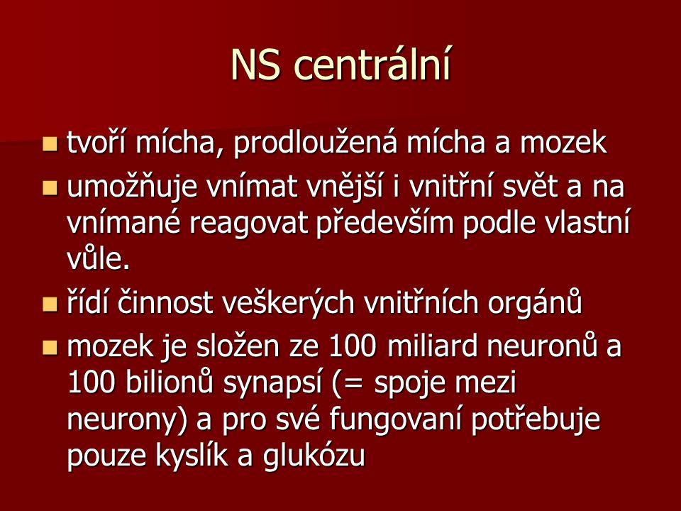 NS centrální tvoří mícha, prodloužená mícha a mozek tvoří mícha, prodloužená mícha a mozek umožňuje vnímat vnější i vnitřní svět a na vnímané reagovat