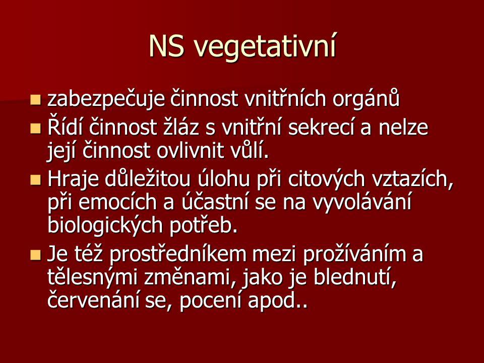 NS vegetativní zabezpečuje činnost vnitřních orgánů zabezpečuje činnost vnitřních orgánů Řídí činnost žláz s vnitřní sekrecí a nelze její činnost ovli