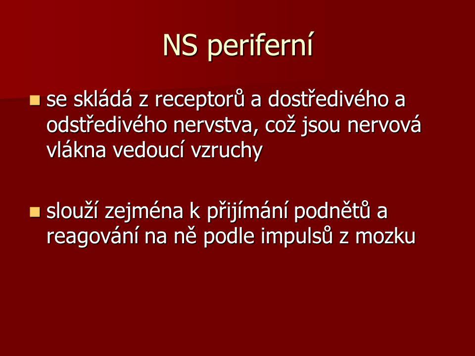 NS periferní se skládá z receptorů a dostředivého a odstředivého nervstva, což jsou nervová vlákna vedoucí vzruchy se skládá z receptorů a dostředivého a odstředivého nervstva, což jsou nervová vlákna vedoucí vzruchy slouží zejména k přijímání podnětů a reagování na ně podle impulsů z mozku slouží zejména k přijímání podnětů a reagování na ně podle impulsů z mozku