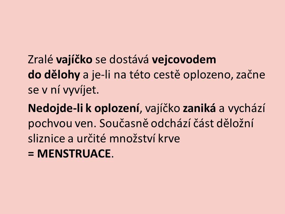 MENSTRUACE Je součástí menstruačního cyklu.Cyklus je řízen hormonálně.