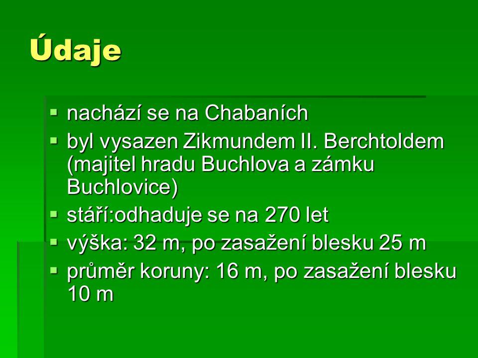 Údaje  nachází se na Chabaních  byl vysazen Zikmundem II. Berchtoldem (majitel hradu Buchlova a zámku Buchlovice)  stáří:odhaduje se na 270 let  v