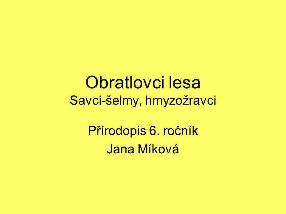 Obratlovci lesa Savci-šelmy, hmyzožravci Přírodopis 6. ročník Jana Míková