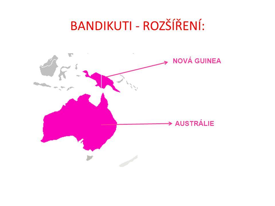 BANDIKUTI - ROZŠÍŘENÍ: NOVÁ GUINEA AUSTRÁLIE